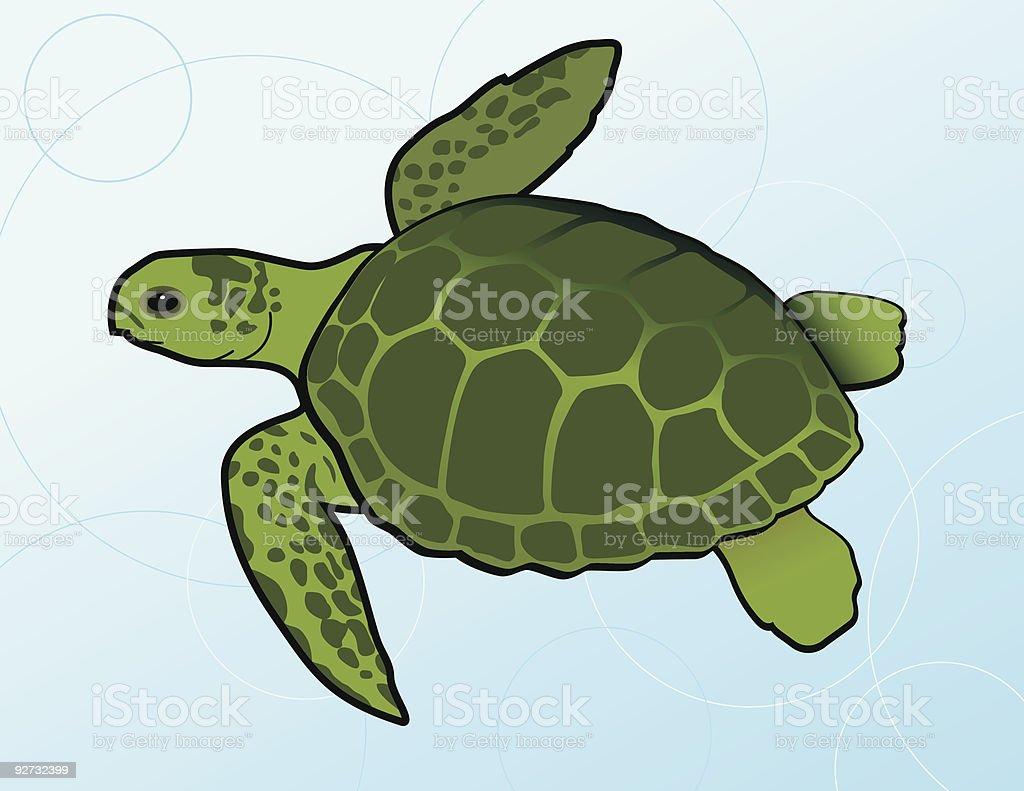Swimming Green Sea Turtle (Chelonia Mydas) vector art illustration
