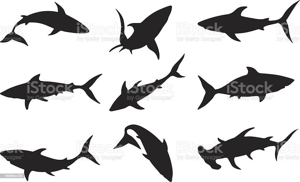 Swimming sharks vector art illustration