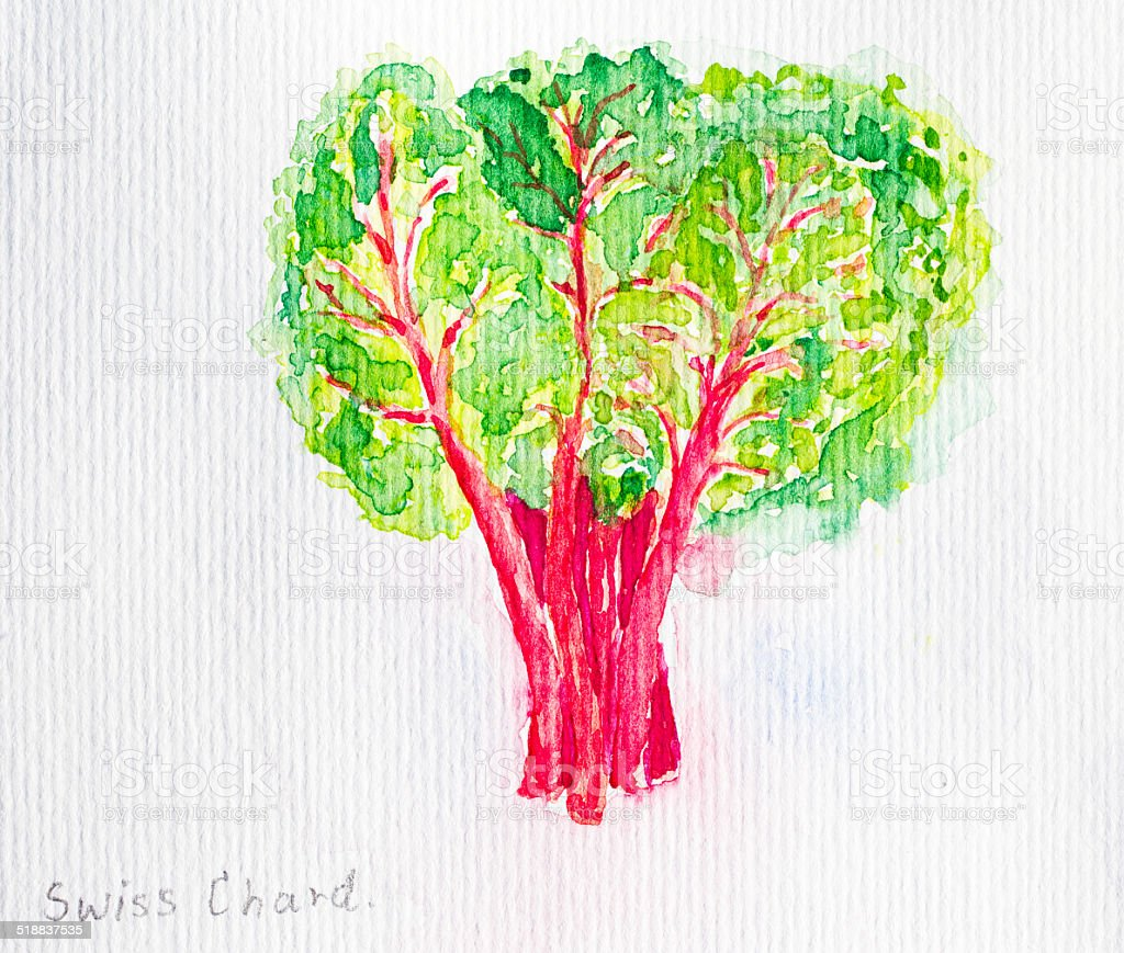 swiss chard'watercolor painted vector art illustration