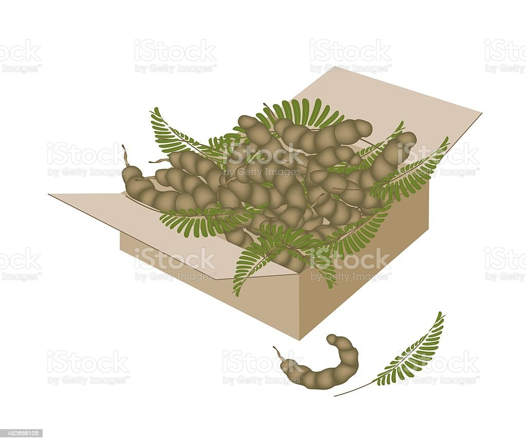 Tamarind Pod and Leaves in A Shipping Box vector art illustration