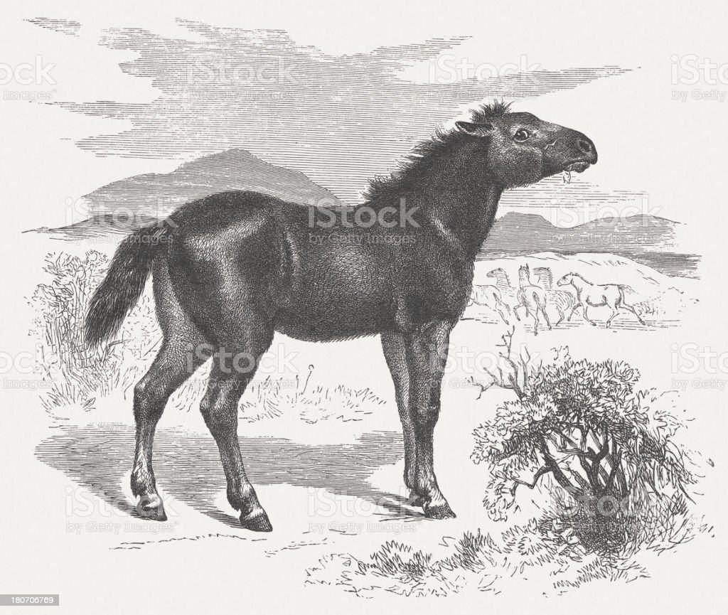 Tarpan (Equus ferus ferus), wood engraving, published in 1875 royalty-free stock vector art