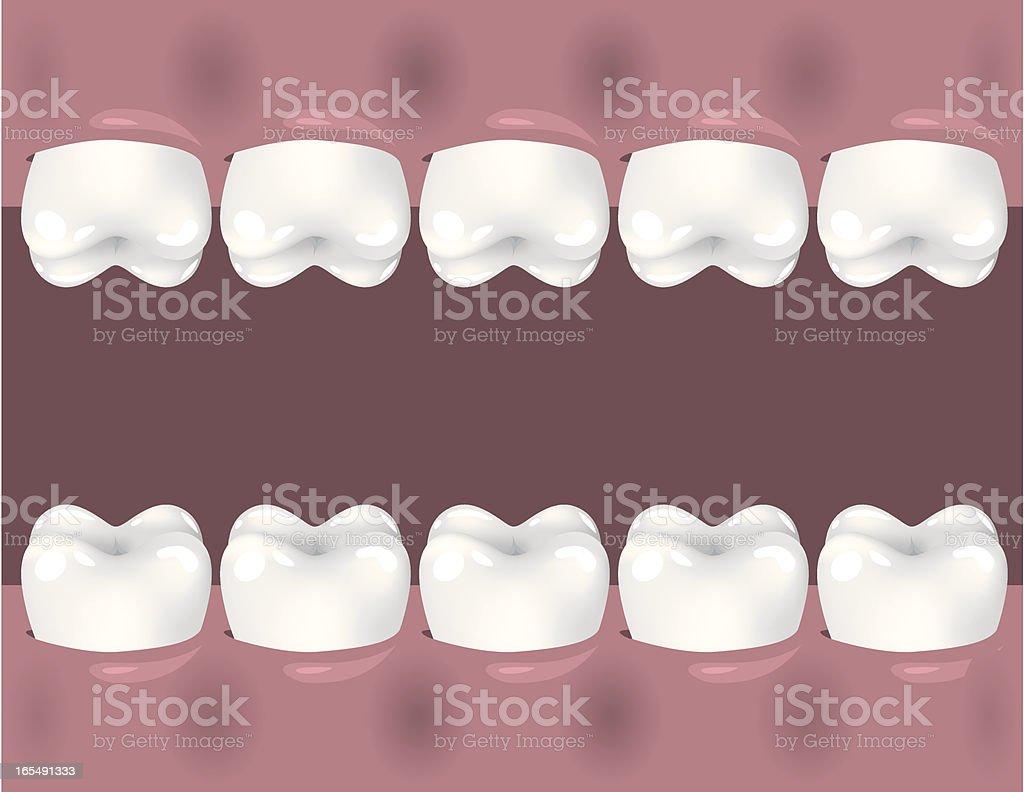 teeth vector art illustration