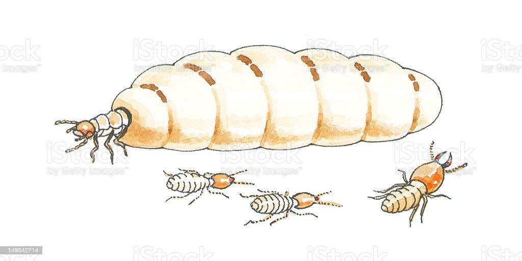 termite queen royalty-free stock vector art