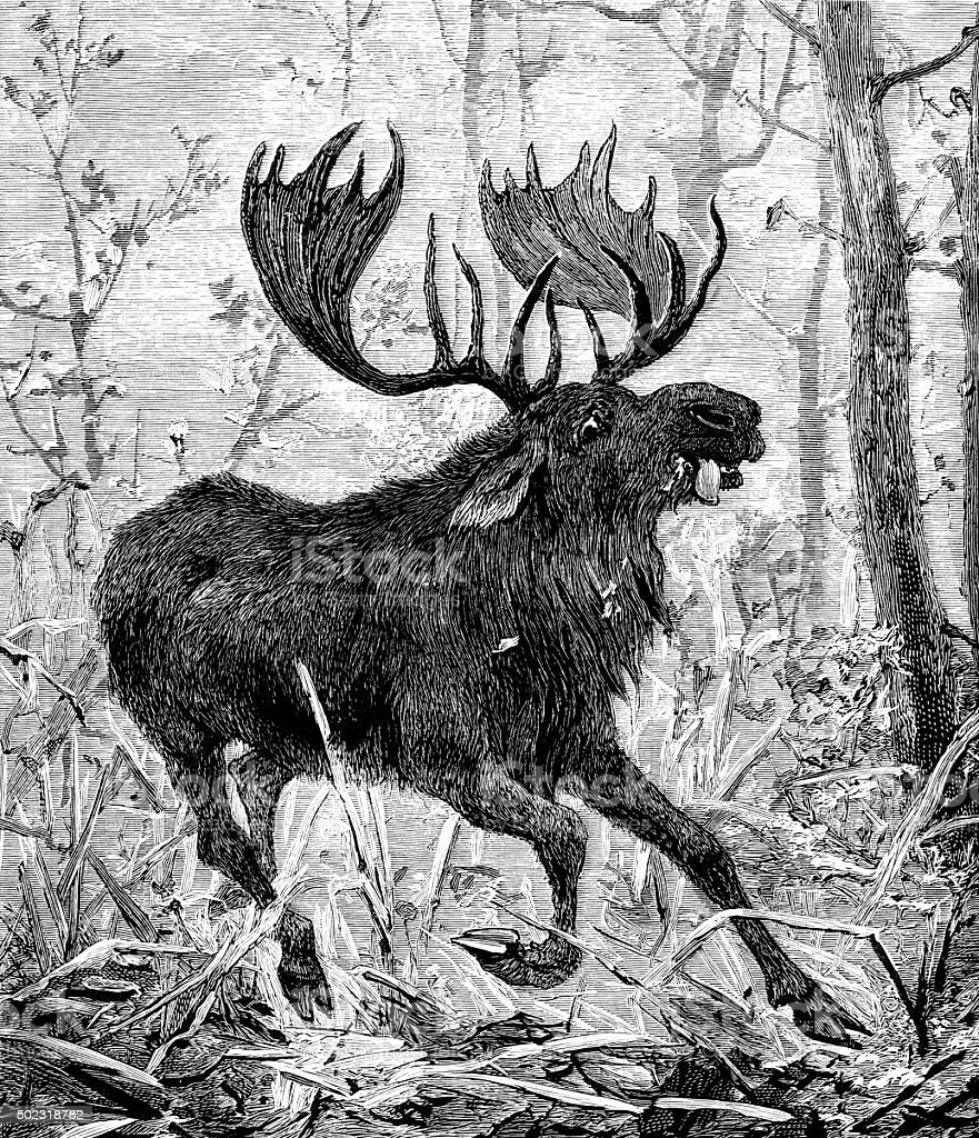 Terrified and wounded moose trying to escape vector art illustration