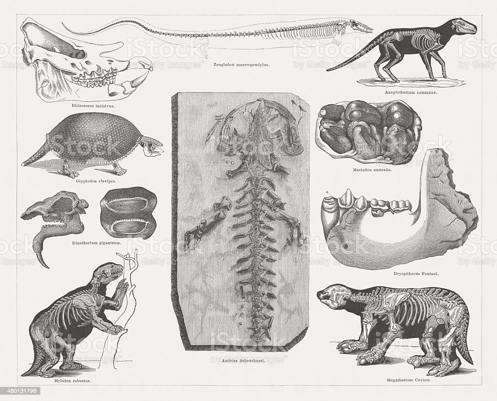 Tertiary fossils, published in 1878 vector art illustration
