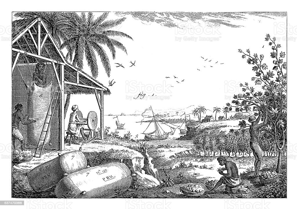 Textile industry: Cotton plantation (antique engraving) vector art illustration