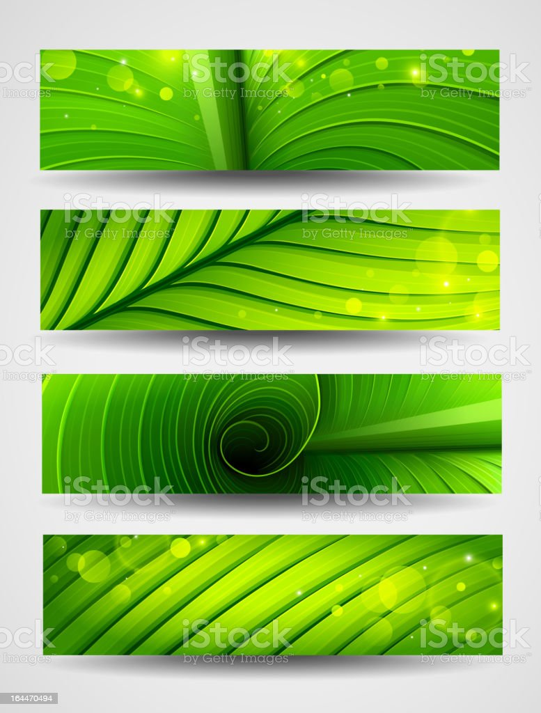Texture of green leaf royalty-free stock vector art