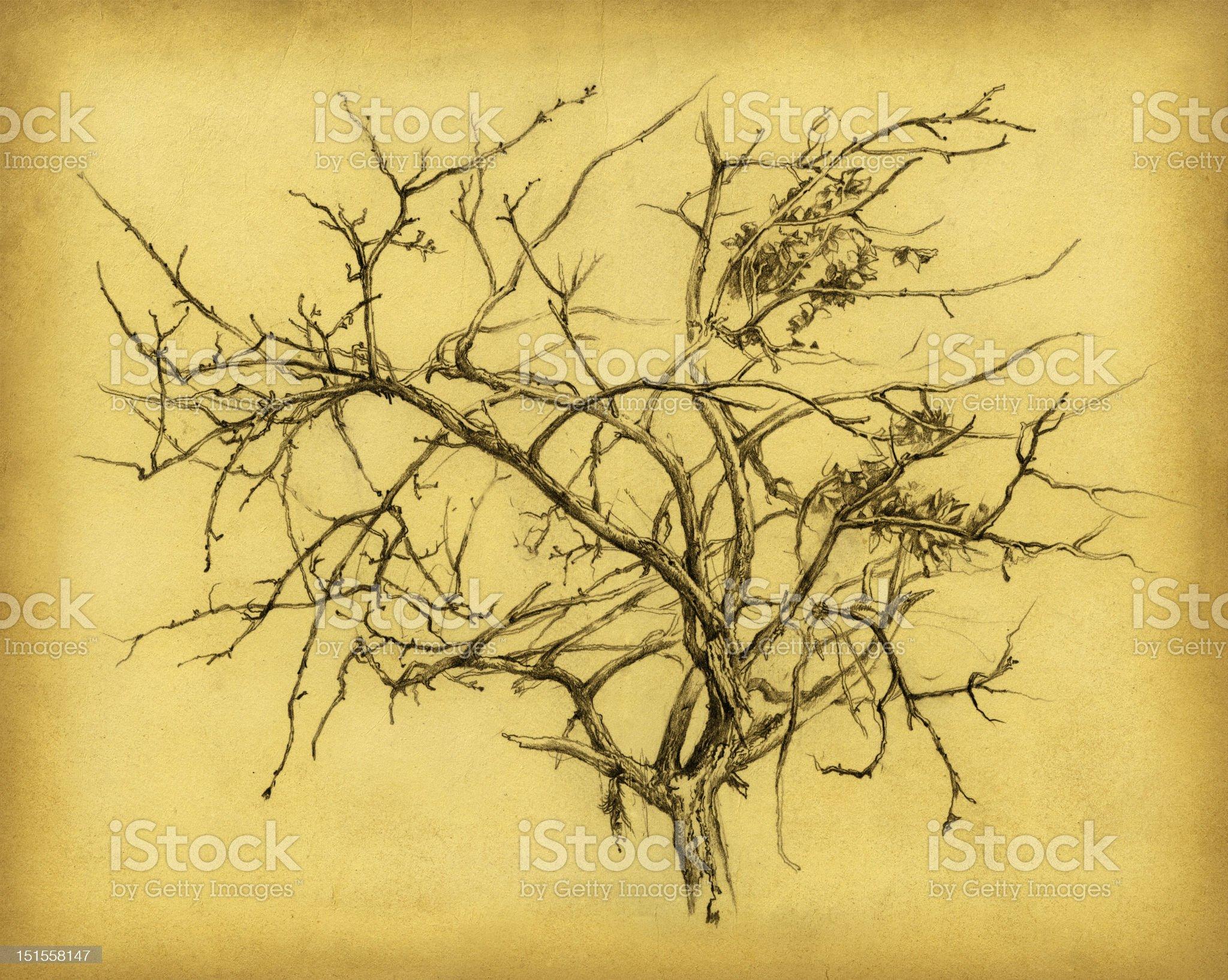 The bare tree. royalty-free stock vector art