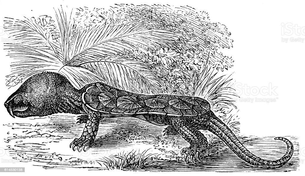 The big-headed turtle (Platysternon megacephalum vector art illustration