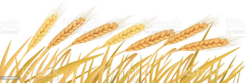 The ears of wheat. royalty-free stock vector art