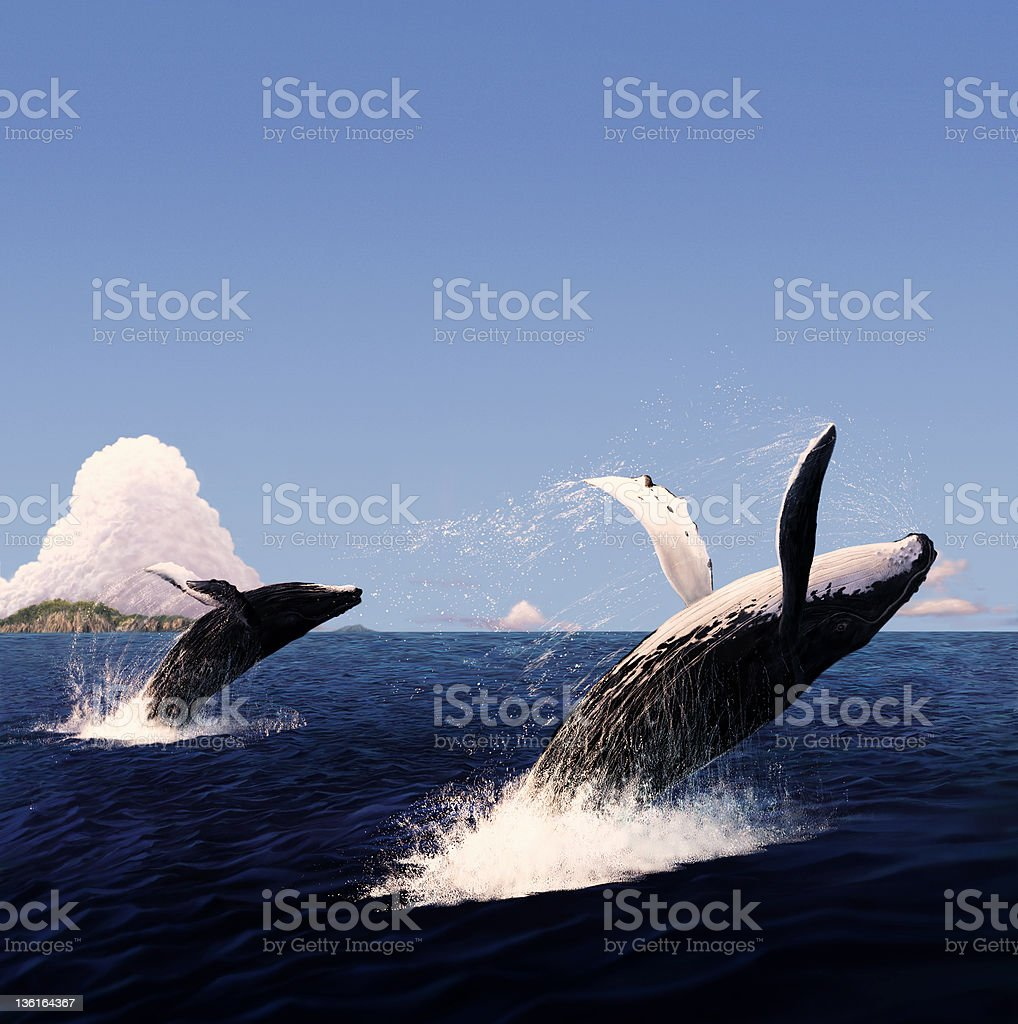 The jumping of whale vector art illustration