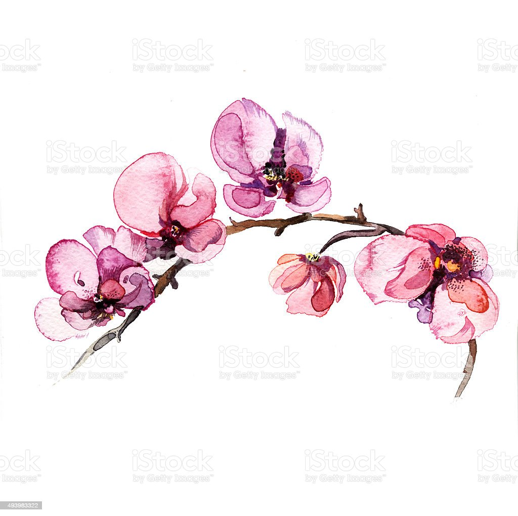 the orchid flowers watercolor isolated vector art illustration