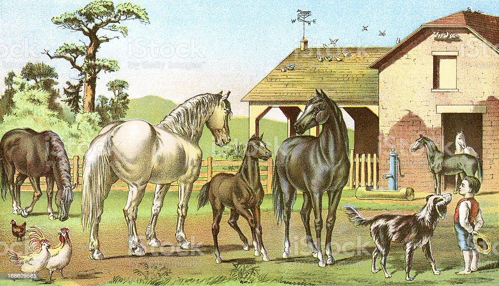 The Stable Yard vector art illustration