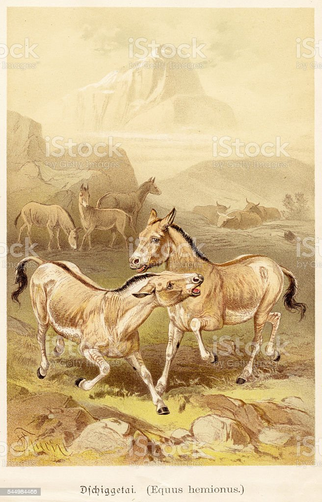 The wild ass illustration 1888 vector art illustration