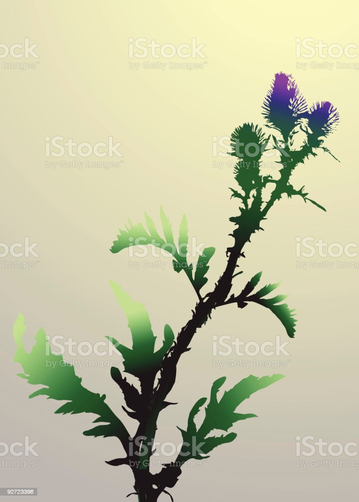 Thistle royalty-free stock vector art