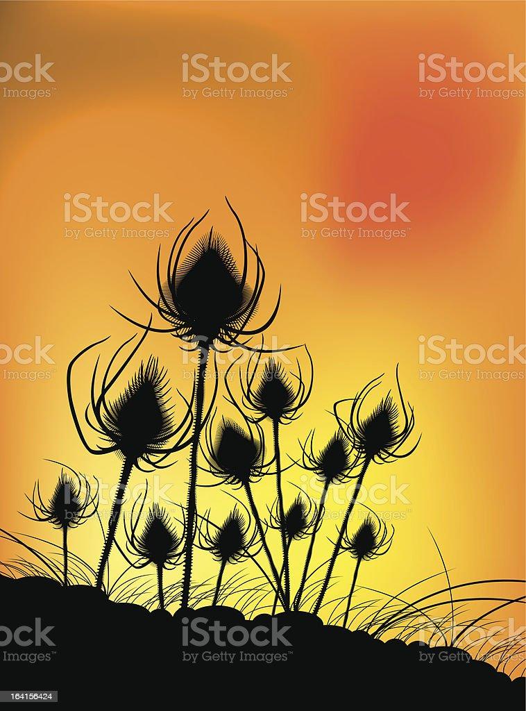 Thistles at dusk royalty-free stock vector art