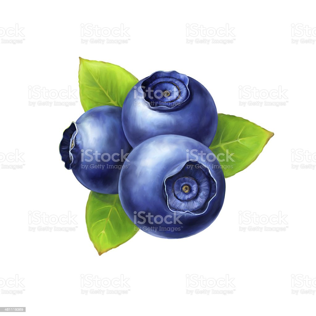 Three blueberries bunched together with leaves on white vector art illustration