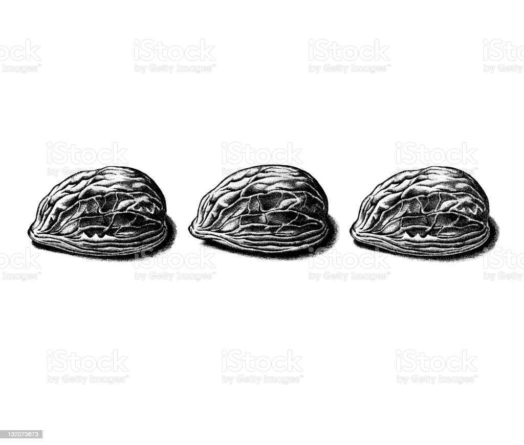 Three Nut Shells vector art illustration