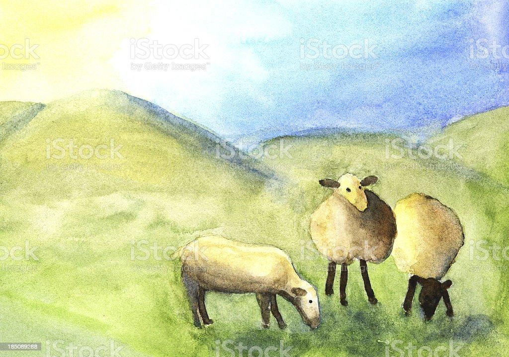 Three Watercolor Sheep royalty-free stock vector art