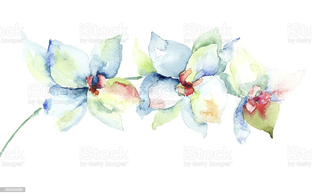 Three watercolored orchid flowers on a white background vector art illustration