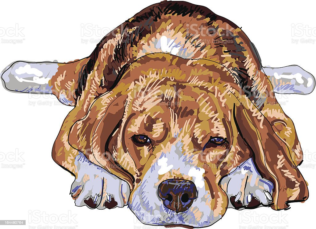 Tired beagle royalty-free stock vector art