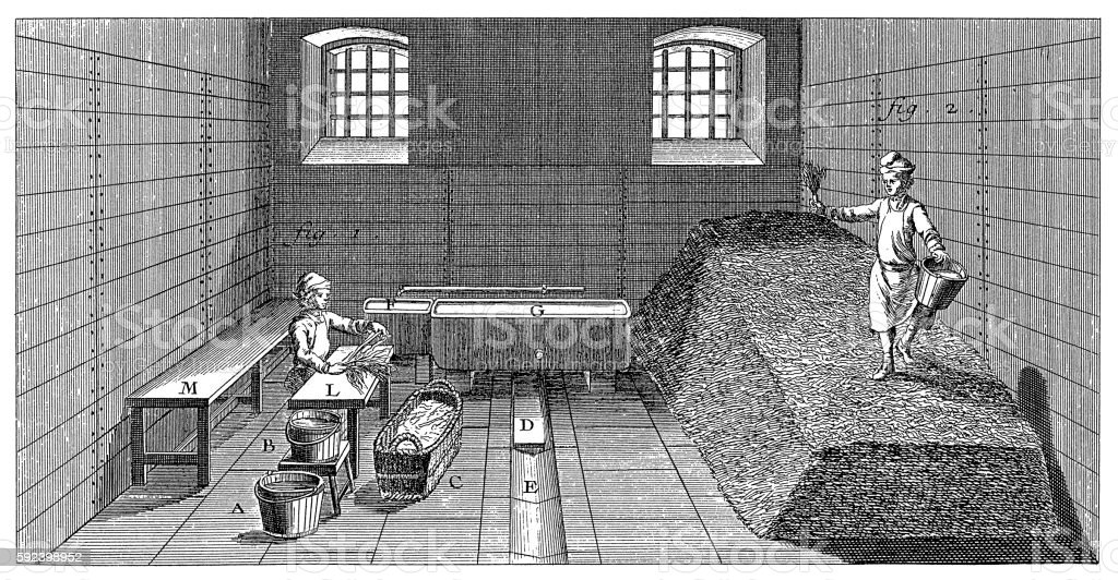 Tobacco processing (antique engraving) vector art illustration