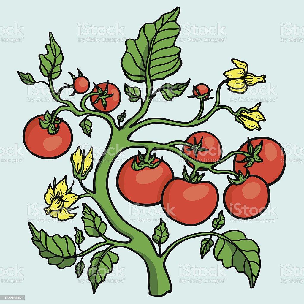 Tomato plant royalty-free stock vector art