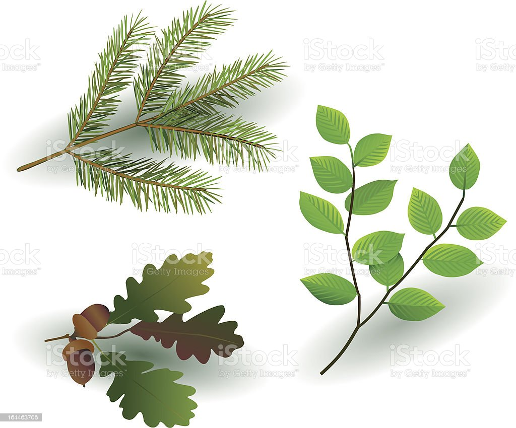 tree branch vector art illustration