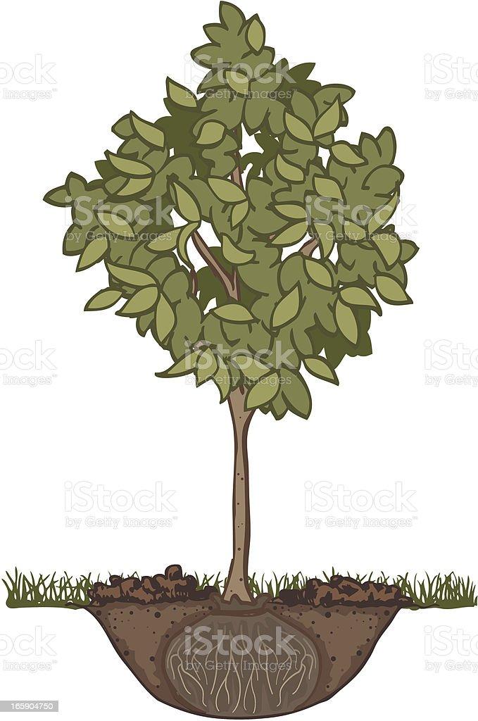 Tree Planting vector art illustration