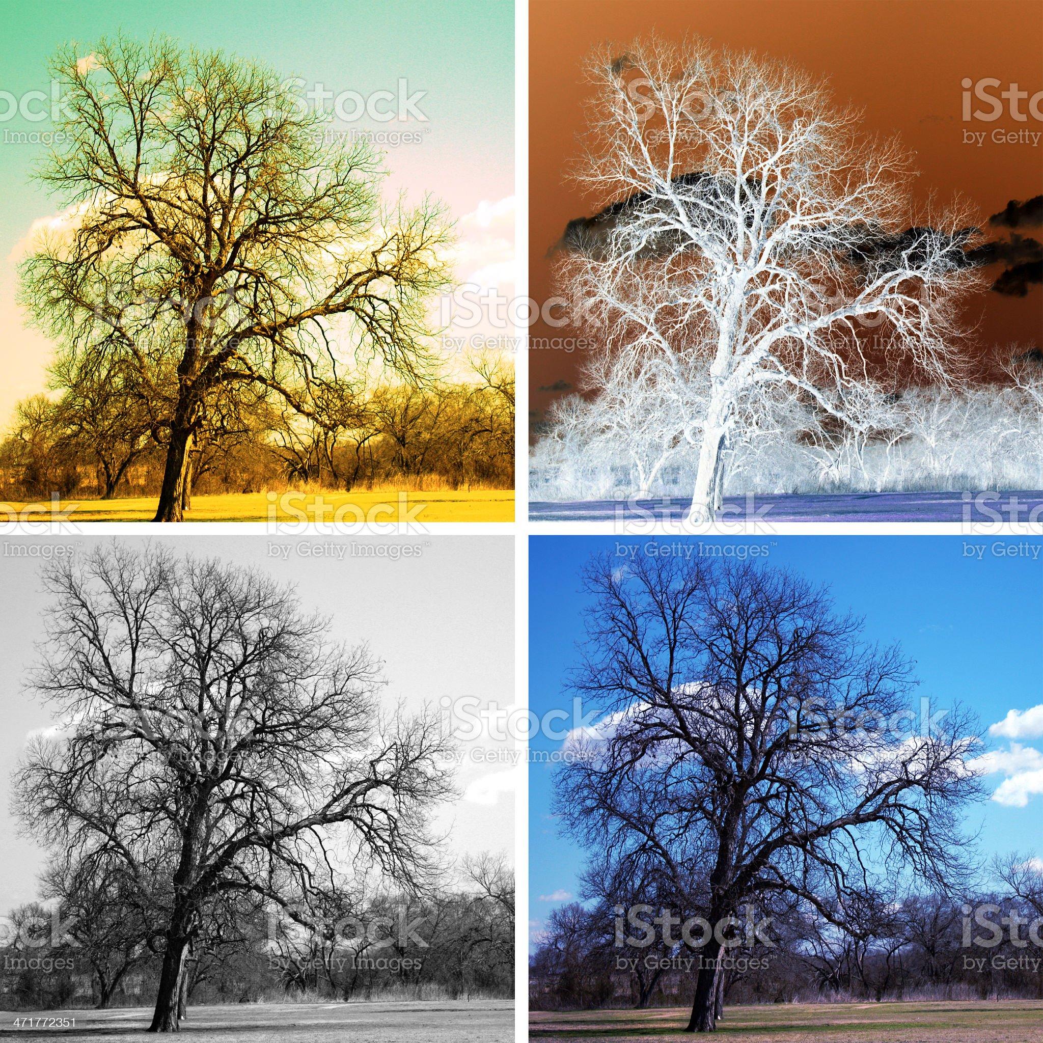 trees in season royalty-free stock vector art