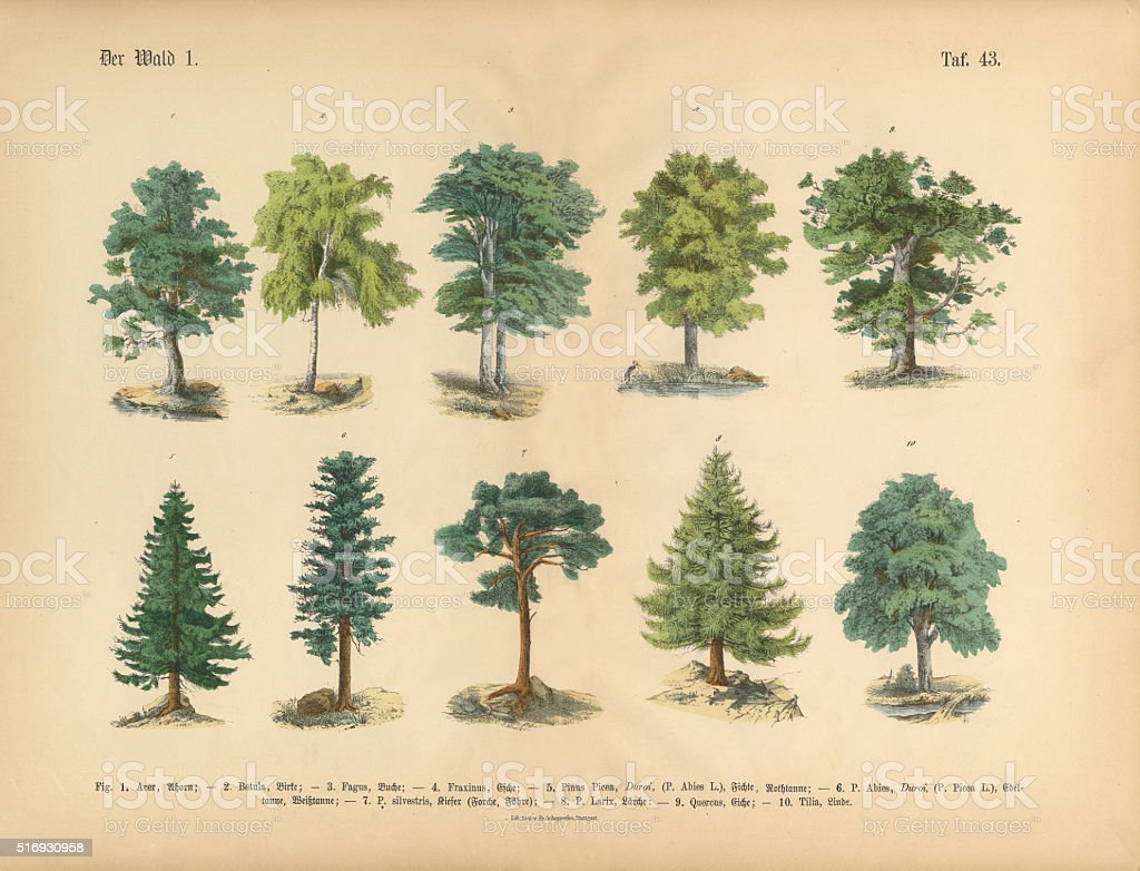 Trees in the Forest, Victorian Botanical Illustration vector art illustration
