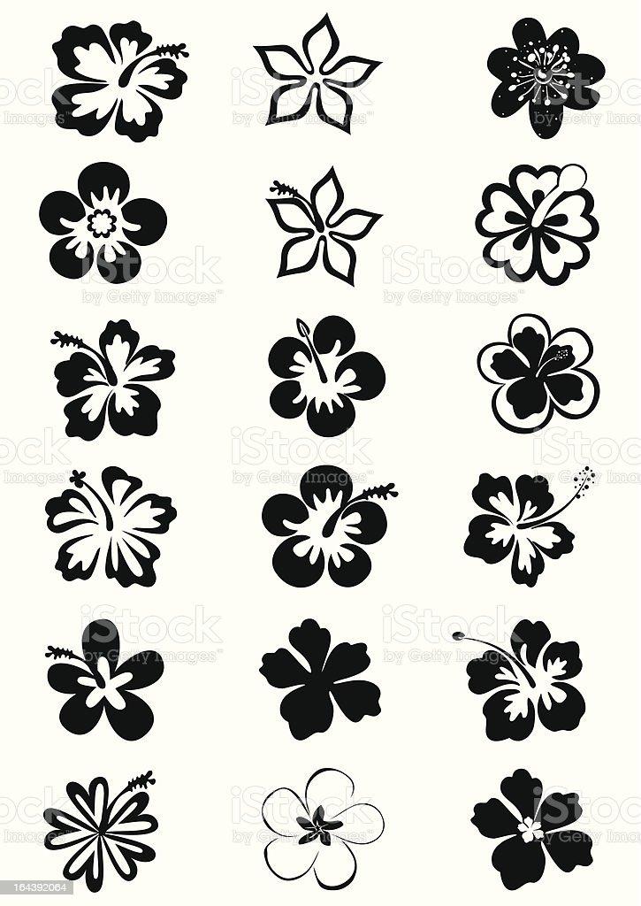 tropical flower's images vector art illustration