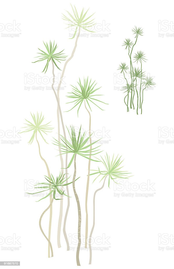 Tropical Plant royalty-free stock vector art