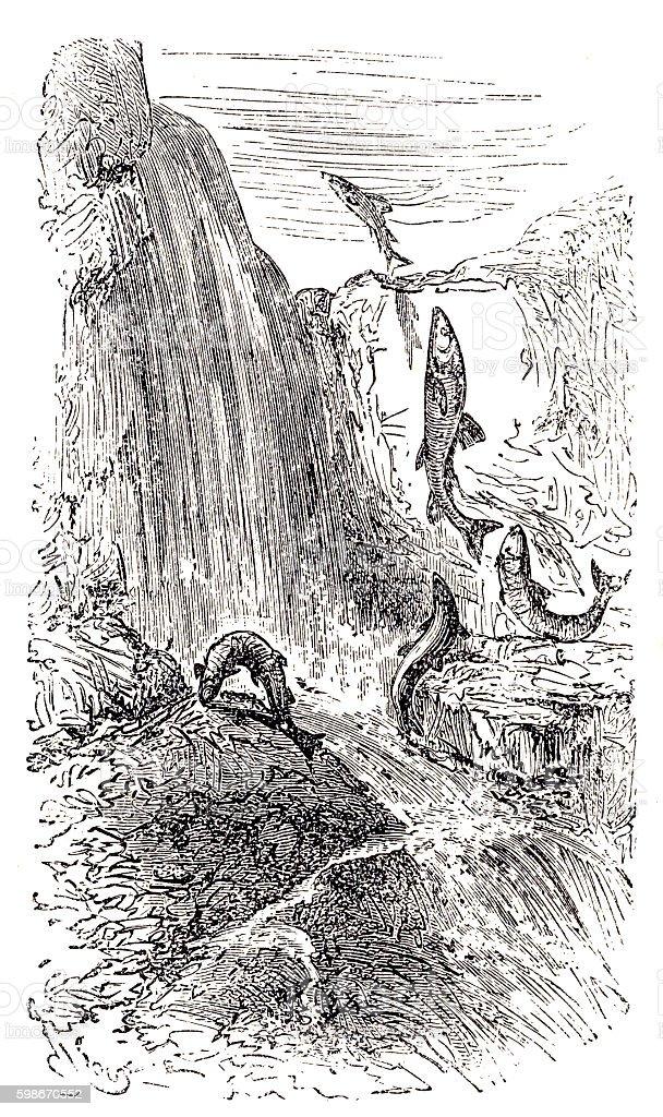 Trouts vector art illustration