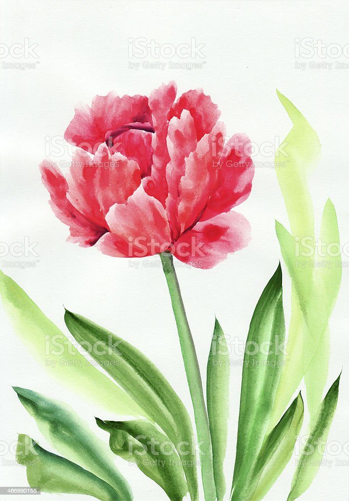 Tulip flower royalty-free stock vector art
