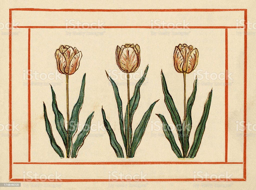 Tulips - Kate Greenaway, 1884 royalty-free stock vector art