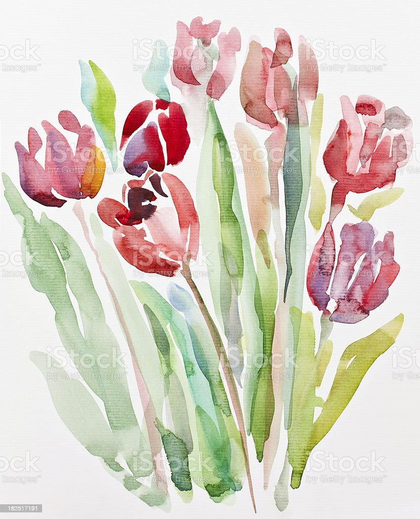 Tulips, watercolor painting vector art illustration