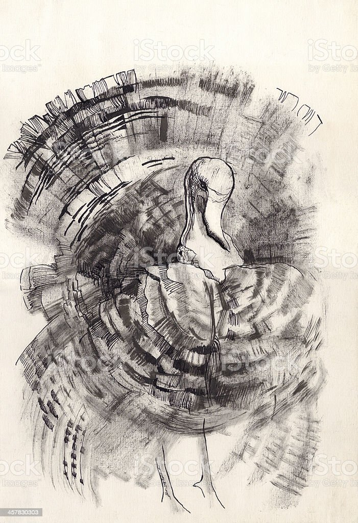 turkey dry brush drawing sketch royalty-free stock vector art