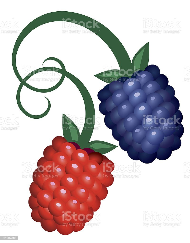 Two berries.eps royalty-free stock vector art