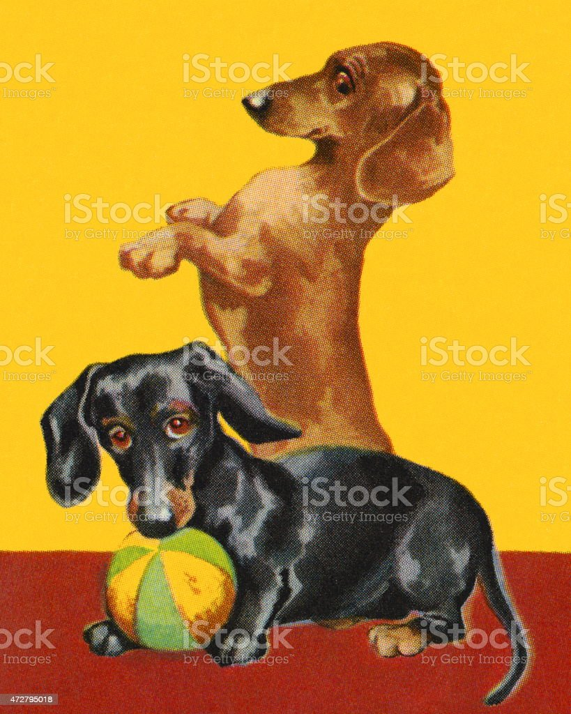 Two Dachshunds vector art illustration