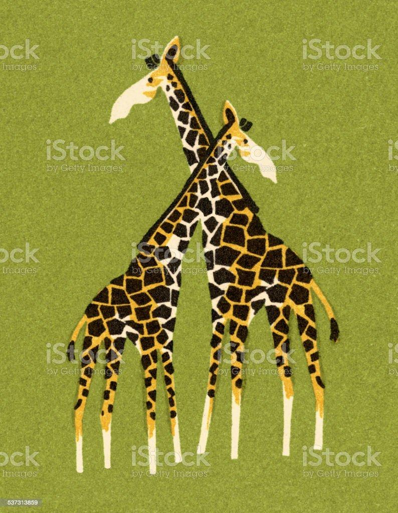 Two Giraffes vector art illustration