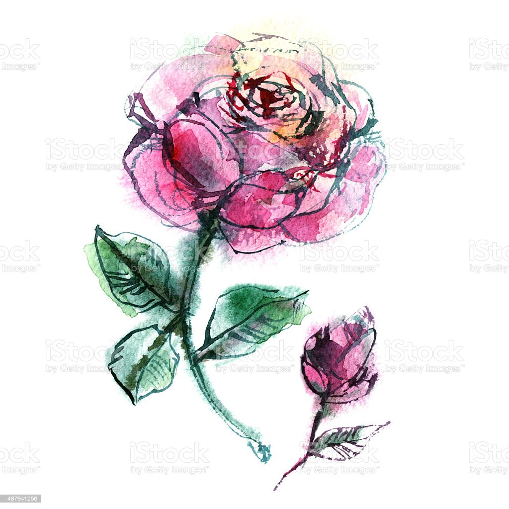 two pink roses on white background vector art illustration