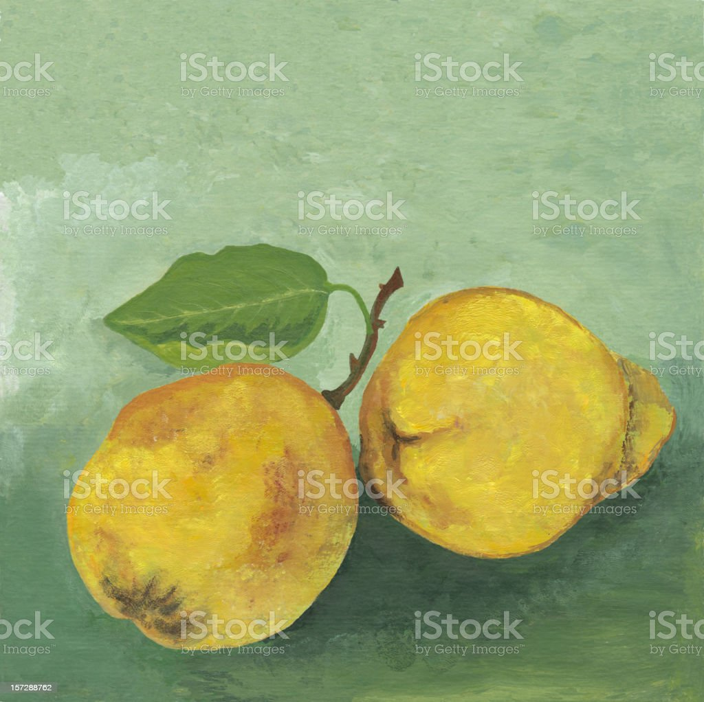 Two quinces royalty-free stock vector art