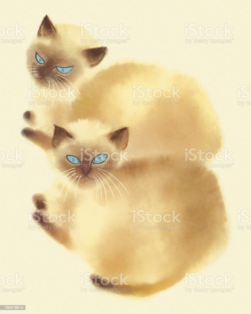 Two Siamese Cats royalty-free stock vector art