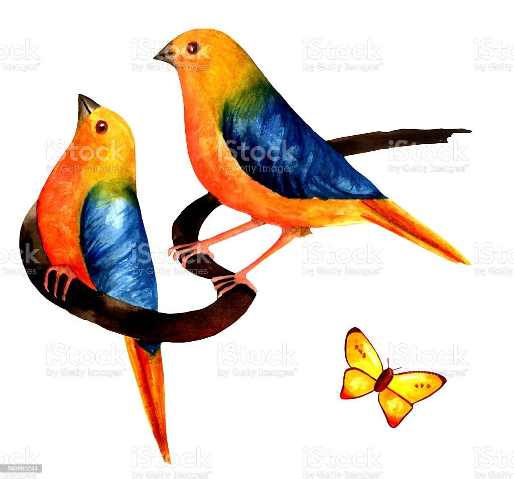 Two vibrant watercolor birds with butterfly on white vector art illustration