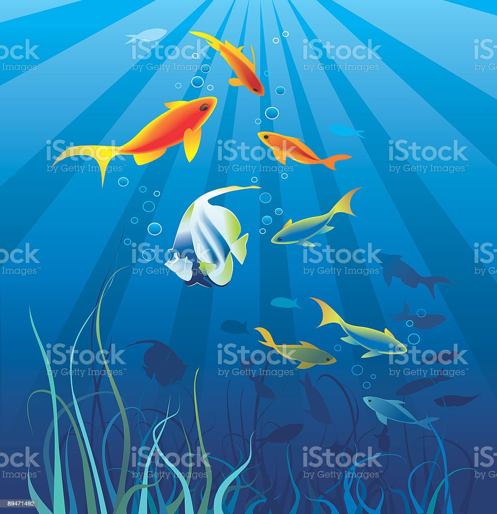 Underwater life, sea. Fish, seaweeds, rays, bubbles royalty-free stock vector art