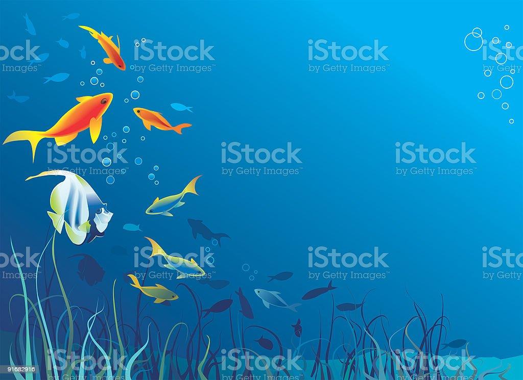 Underwater life, sea. Fish, seaweeds. Vector illustration royalty-free stock vector art
