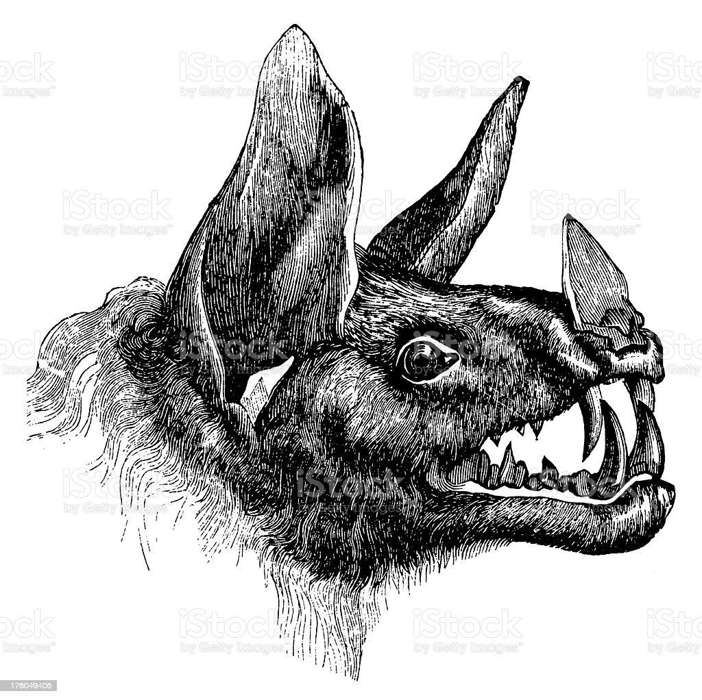 Vampire bat | Antique Animal Illustrations royalty-free stock vector art