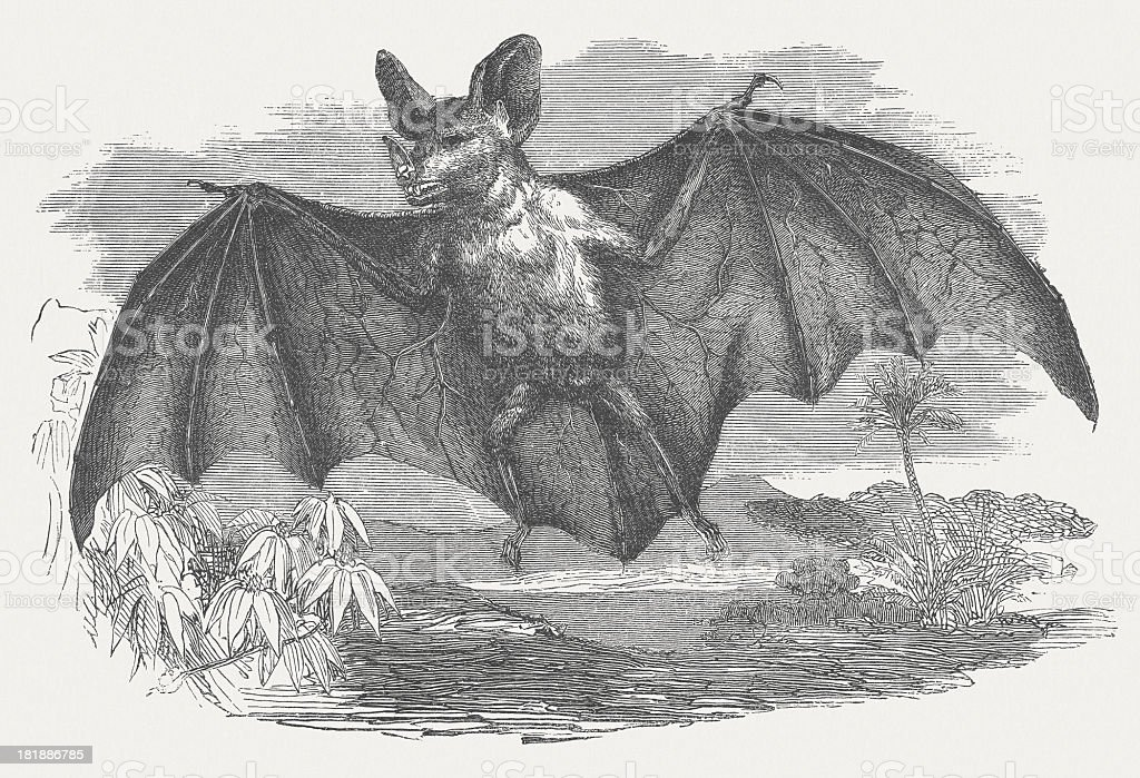 Vampire bat, Desmodus rotundus, wood engraving, published in 1875 royalty-free stock vector art