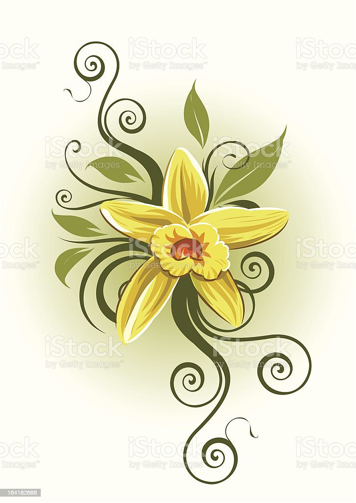 Vanilla orchid royalty-free stock vector art